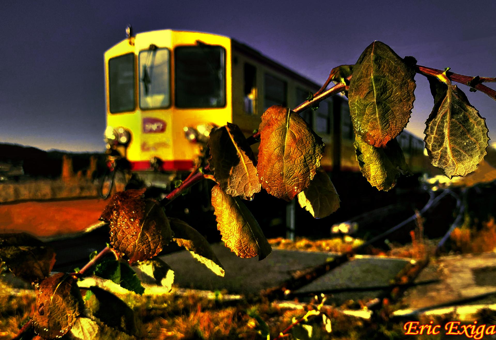 La chenille de feuille d automne et le canari en gare de saillagouse